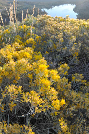 Fall wild flowers and dry grasses glow in the early morning golden glow of the sunrise. Stock fotó