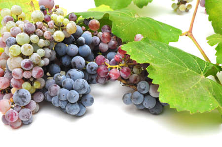 ripeness: Wild grapes and leaves in various degrees of ripeness Stock Photo