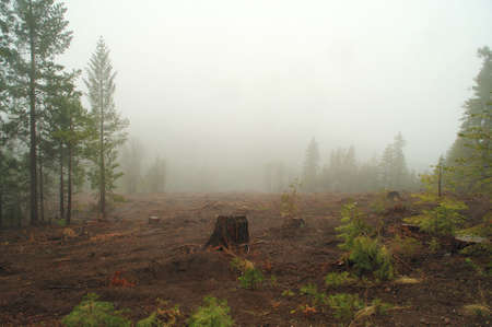A single tree stump left in a cleared area in the forest after logging was done.