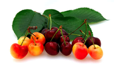 fresh picked bing and rainier cherries on a white background with cherry leaves