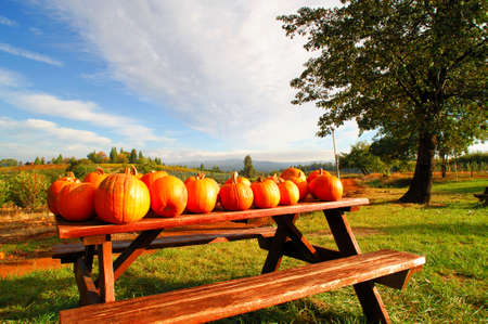 Pumpkins on a picnic bench at a farm available for sale to the public with rolling hills and orchards in the background with a bright blue sky.