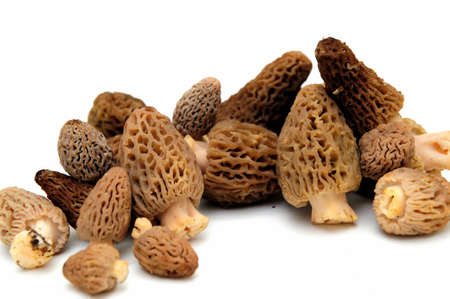Morel mushrooms from the California sierra mountains found only in the springtime and highly sought after by gourmet chefs
