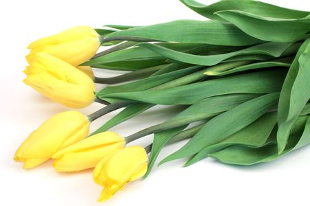 donative: Yellow tulips lying on a white background Stock Photo