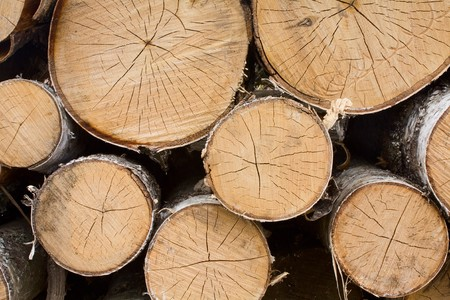 neatly stacked: cut trees neatly stacked in a pile