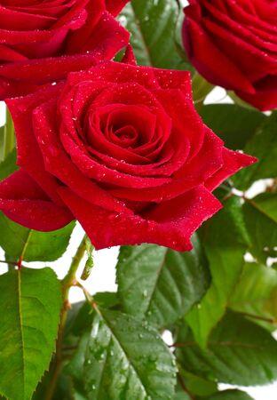 Hermoso ramo de rosas rojas brillantes sobre un fondo claro Foto de archivo - 9609015
