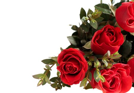 festal: bouquet of red roses on white background