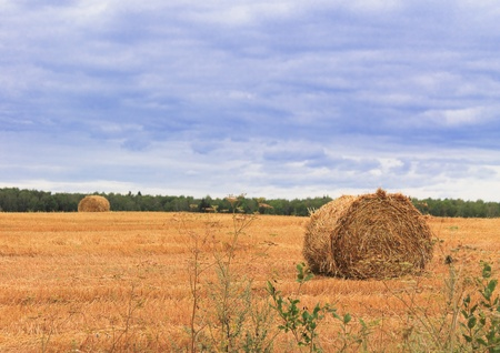 rebelling: haystacks on the filed in cloudy day Stock Photo