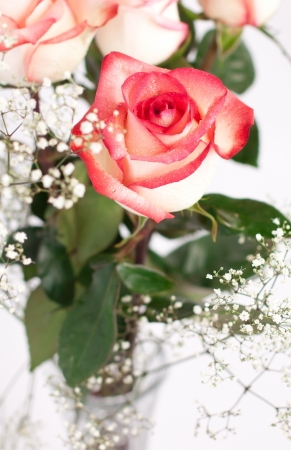 Beautiful white roses with dark pink trim photo