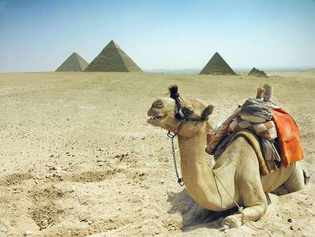 Symbol Egypts - Cairo, Giza - camel with pyramids photo