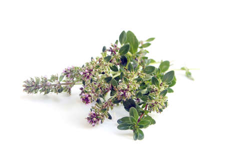 Bunch of fresh herbs thyme ( Thymus serpyllum ) on white background Stock Photo