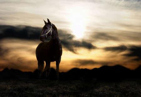 Sunset and balck horse
