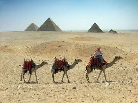 piramide humana: Tres caravanas de camellos atravesando el desierto de arena cerca de la pir�mide en Egipto - El Cairo - Giza Foto de archivo