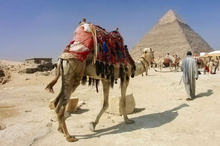 Egypt - Khafras Pyramid with camel of Giza, Cairo Stock Photo