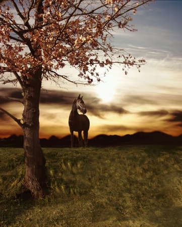 Sunset and black horse Stock Photo - 4906704