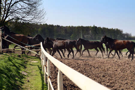 return batch of horses from pasture photo