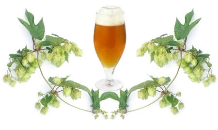 frosty golden beer in glass and hops-plant on white background photo