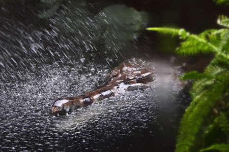 Crocodile in water with spraying by water Stock Photo - 7280839