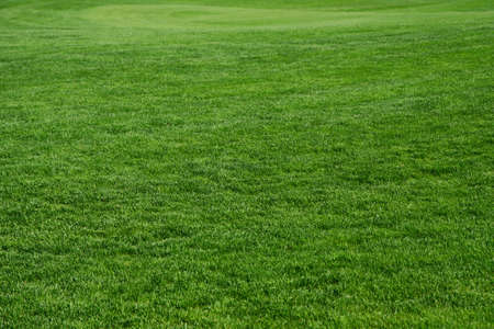 Grass on a golf course photo