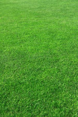 Grass on a golf course Foto de archivo