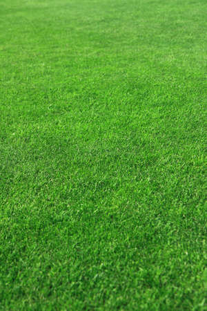 Grass on a golf course Stock Photo