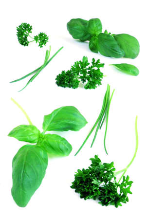 green herbs on white background Foto de archivo