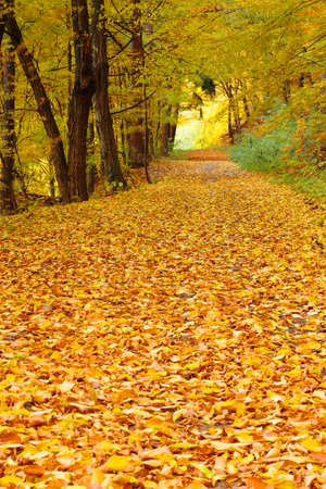 golden autumn in forest with way photo
