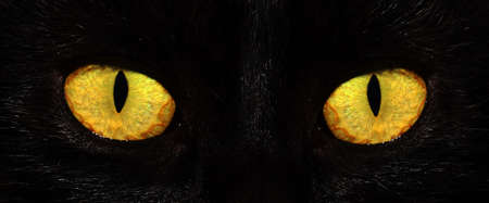 eyes of black cat in dark photo