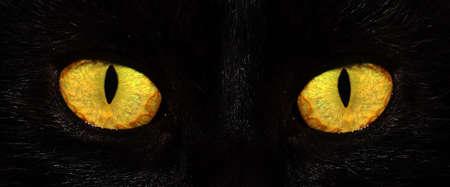 eyes of black cat in dark