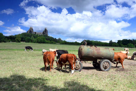 cistern: Czech Republic - stronghold Trosky in Cesky raj  Czech paradise  with cows Stock Photo