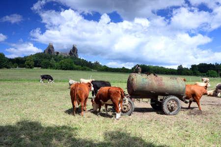 cisterna: República Checa - Trosky en Cesky raj fortaleza Checa paraíso con vacas