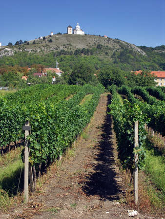 grape field: Czech Republic - Mikulov (Svaty kopecek) with vineyard Stock Photo