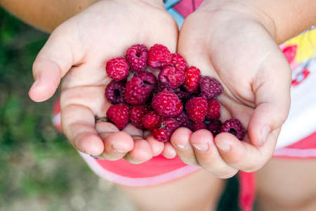 Girl Hands with Red Raspberry photo