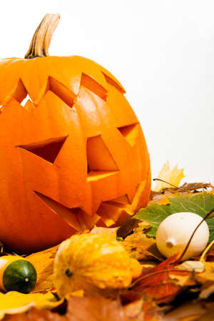 Halloween Pumpkin with autumn leaves with white background photo