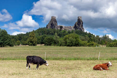 stronghold: Czech Republic - stronghold Trosky in Cesky raj (Czech paradise) with cows