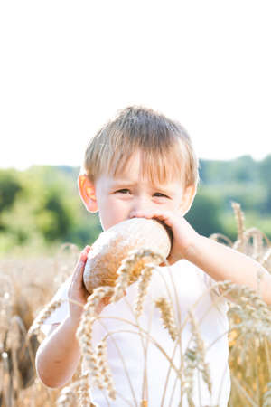 boy beautiful: Boy with the bread over your head in the mature grain with the sun at your back for dream atmosphere