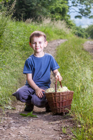 Czech Republic - collecting elder blossom flower - boy with full herbs flower basket on way Stock Photo