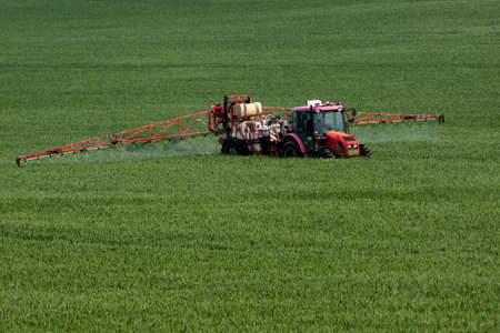 Tractor spraying pesticides on big green field with young grain