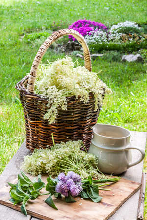 Elder blossom flower in a basket in the garden - herbs to prepare syrup with an old white jug