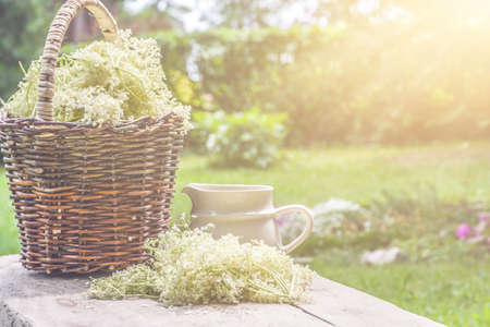 Elder blossom flower in a basket in the garden - herbs to prepare syrup with an old white jug and with sun rays Stock Photo