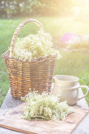 Elder blossom flower in a basket in the garden - herbs to prepare syrup with an old white jug and with sun rays Reklamní fotografie