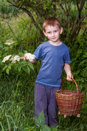 Czech Republic - collecting elder blossom flower - boy with full herbs flower basket
