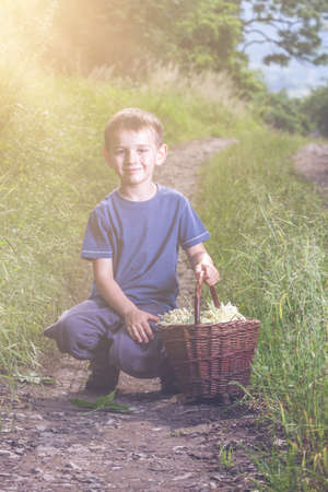 Czech Republic - collecting elder blossom flower - boy with full herbs flower basket on way photo