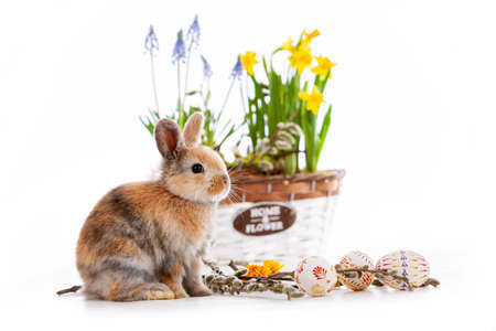 Cute dwarf rabbit with Easter motif on a white background. Imagens