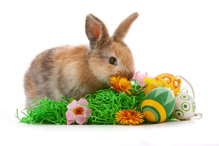 Cute dwarf rabbit with Easter motif on a white background.