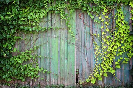 natural green leaf frame on wooden fence photo