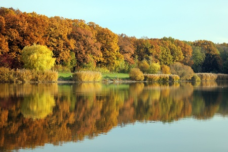 colorful autumn forest at the Lake Bull, Hungary photo