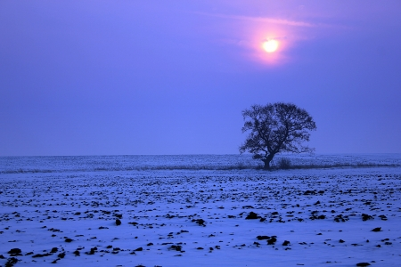 winter sunset with lonely tree in snowy field photo