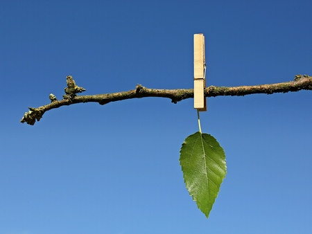 last green leaf hanging on a dry tree branch fixed by wooden clothes peg against blue sky global warming concept photo
