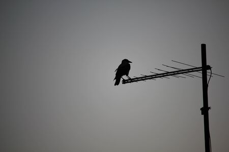 Crow silhouette standing on tv antenna on roof of house in the evening Banco de Imagens