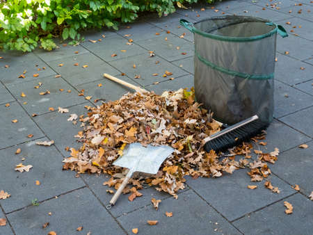 Falling leaves in autom have to be cleaned away